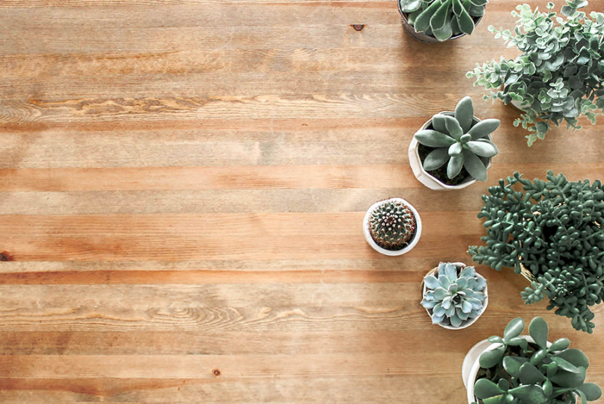 Five Luxe Indoor Plants Perfect for Décor