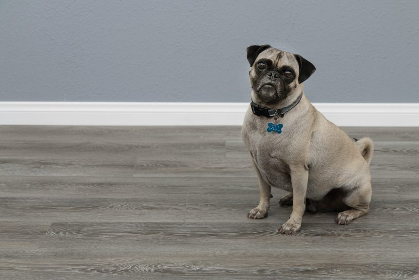 New Flooring for National Home Improvement Month